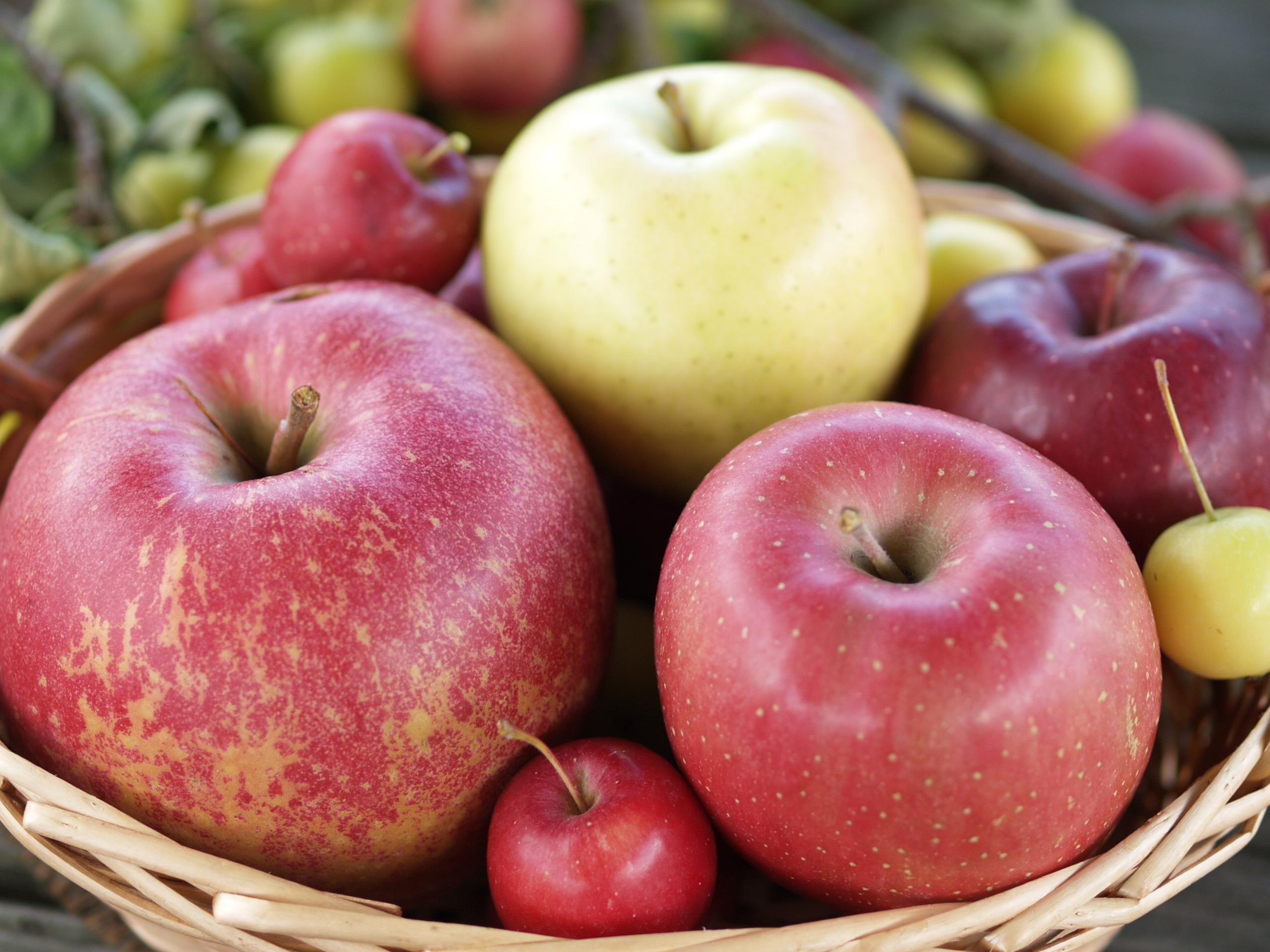 約20種のりんご