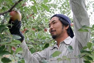 いっちゃん林檎農園 田中 一彦(たなか かずひこ)PLANET OF THE APPLES りんごの惑星