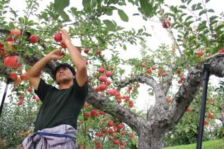 PLANET OF THE APPLES りんごの惑星 農園の様子