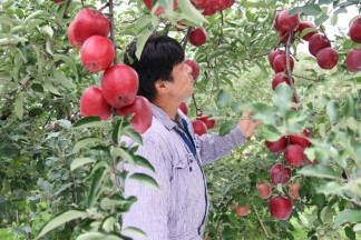 PLANET OF THE APPLES りんごの惑星 まさひろ林檎園