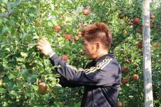 PLANET OF THE APPLES りんごの惑星 赤石 淳市さん