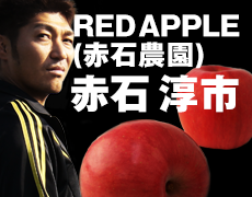 ��󤴤������ͥåȥ���å� RED APPLE